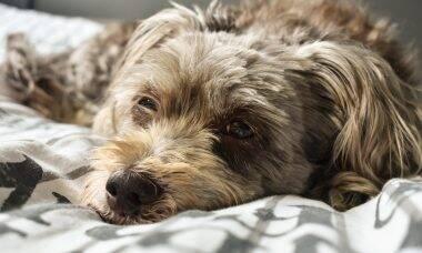 Se não forem tratadas a tempo, infecções nos olhos podem cegar seu pet