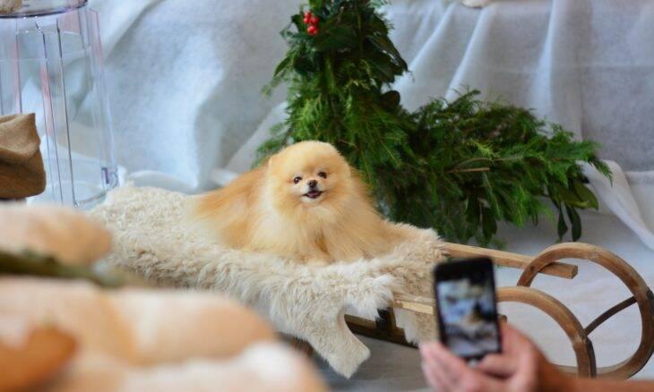Confira as 10 raças de cães mais populares no TikTok