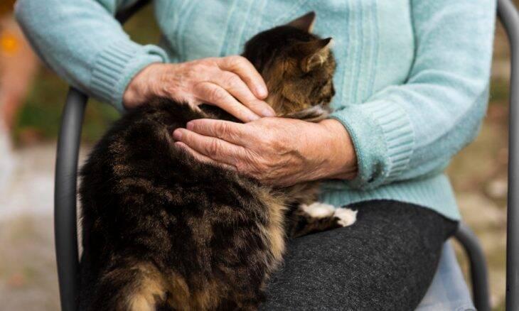Confira as 25 raças de gatos que convivem melhor com idosos