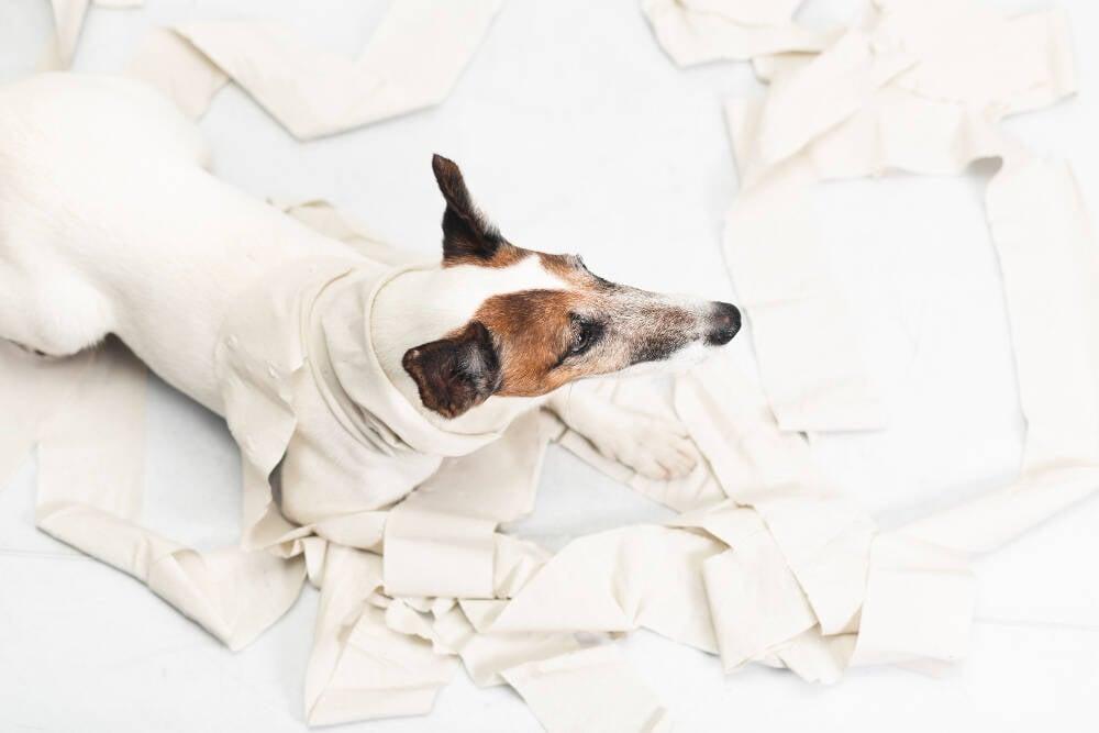 Conheça as 5 raças de cães mais destruidoras da sua casa, seus móveis, seus sapatos...