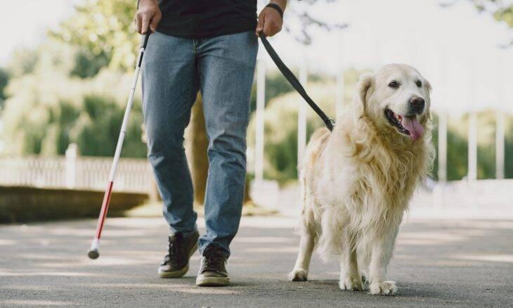 580 mil deficientes visuais esperam por um cão-guia; só há 200 deles no Brasil