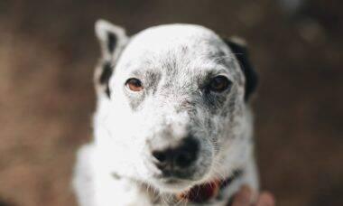 Mistério: 4 pessoas da mesma família e seus 2 cães são encontrados mortos