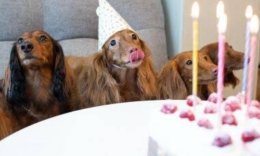 Conheça a versão de 'Parabéns pra Você' que só cães e gatos conseguem ouvir