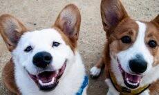 Seu cão precisa de um amigo da mesma espécie?