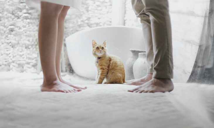 Como ficam as despesas com os pets em caso de separação do casal?