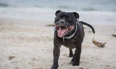 4 dicas simples para que o seu cão tenha uma vida mais longa, saudável e feliz