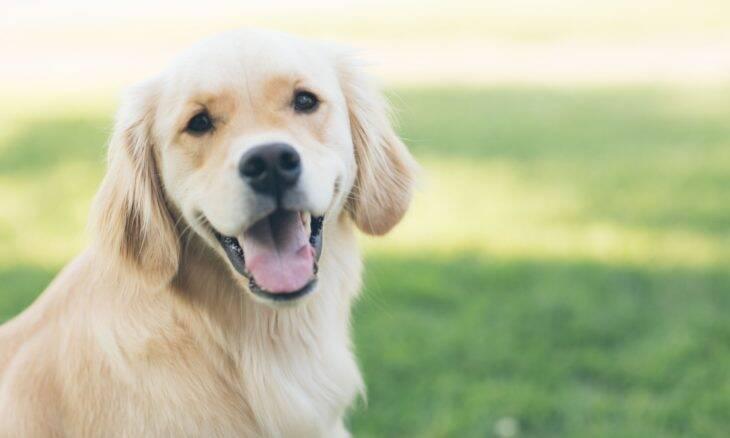 Cães, gatos, peixes, aves, roedores: conheça o ranking dos pets mais populares nos EUA