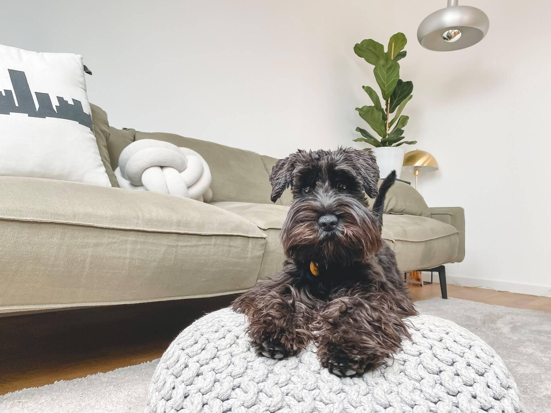 As 20 melhores raças de cães para famílias que vivem em apartamento