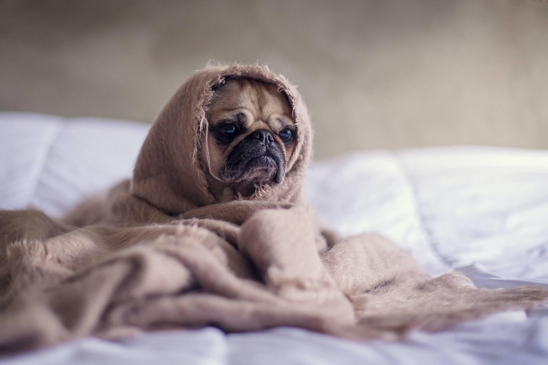 7 dicas para acalmar seu pet em situações estressantes