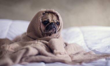 Misteriosa doença canina é identificada como 'coronavírus animal'