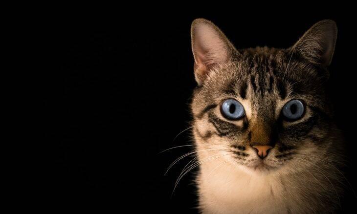 Se eu morresse, meu gato comeria o cadáver? Cientistas respondem
