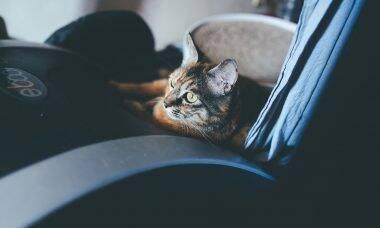 Dono gasta mais de R$ 16 mil para tratar gato 'engolido' por equipamento de ginástica