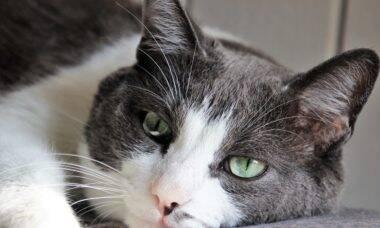 Aprenda a diagnosticar se o seu gato está com vermes e saiba o que fazer