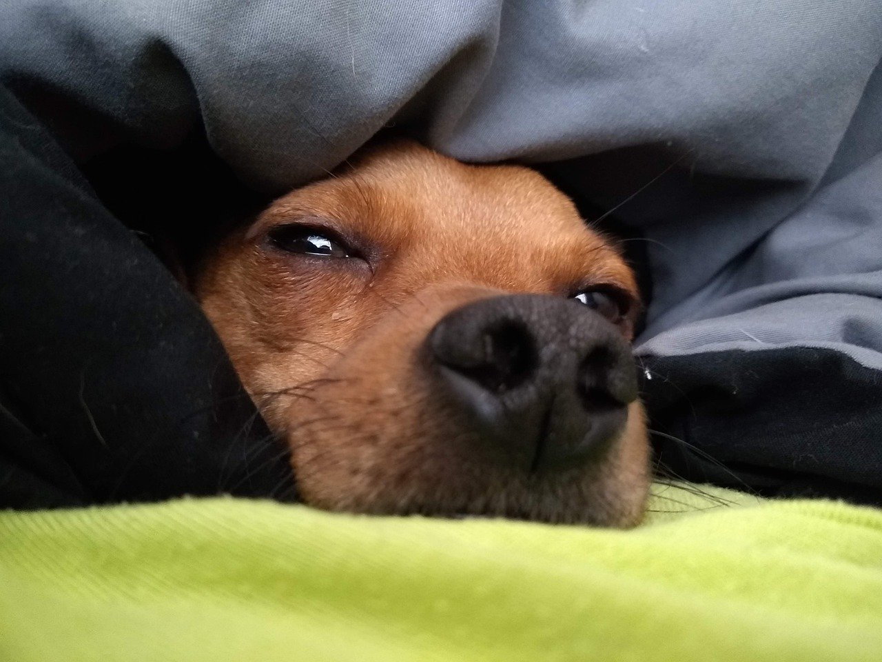 Meu cão tem o hábito de se enfiar embaixo das cobertas; algum problema nisso?