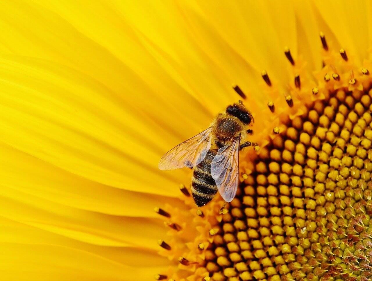 Já pensou em criar abelhas? Um curso mostra que isso é sopa no mel
