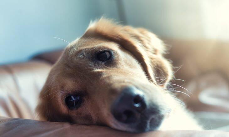 Isolamento social estendido exige cuidados especiais com a saúde do seu pet