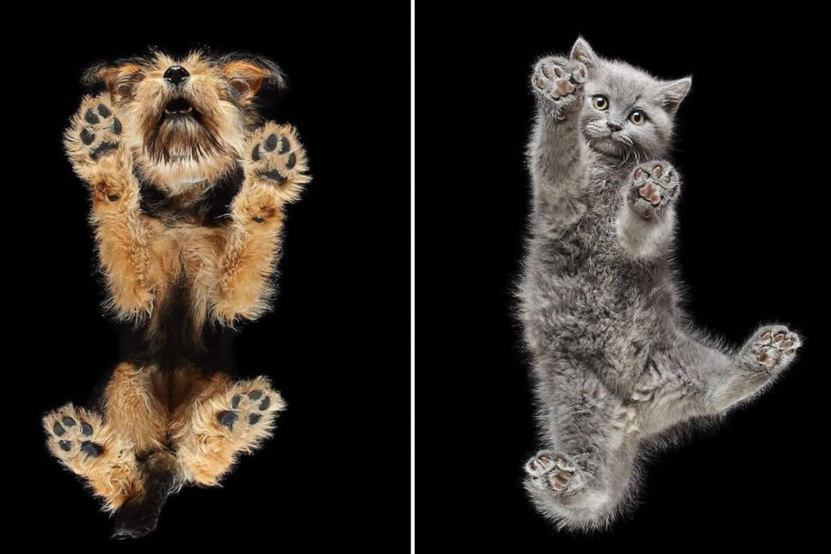 Fotógrafo produz imagens espetaculares de pets vistos por baixo