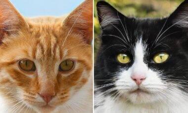 Computadores começam a produzir fotos perfeitas de gatos; em breve, donos serão dispensáveis