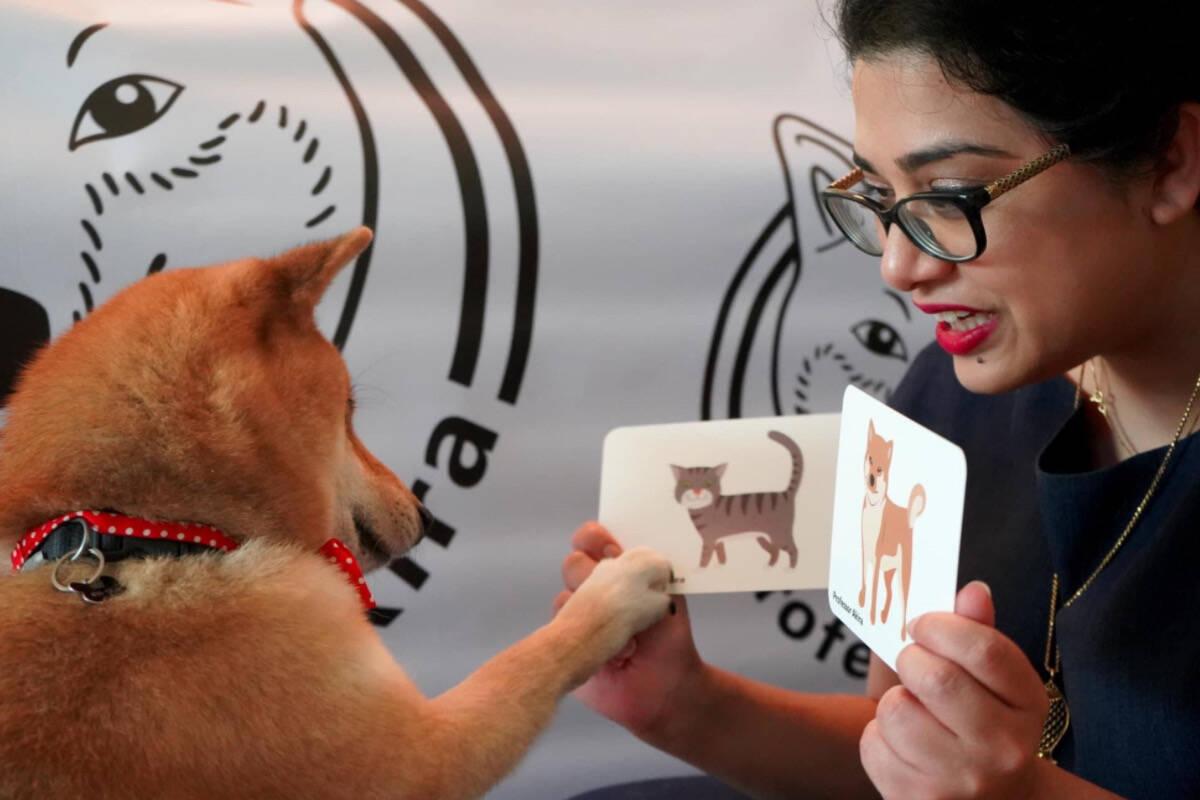 Conheça Akira, o cão esperto que aprendeu matemática e as cores durante a quarentena