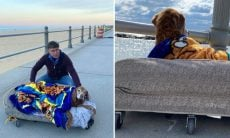 Donos montam cama móvel para que cão idoso aproveite sua última viagem de férias