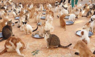 Santuário oferece abrigo para mais de 1.000 gatos vítimas da guerra na Síria