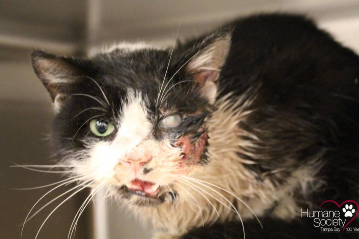 'Gato zumbi' sobrevive a tentativa de assassinato e ganha uma casa nova