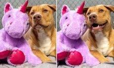 Cão de rua é presenteado com o unicórnio de pelúcia que furtava diariamente