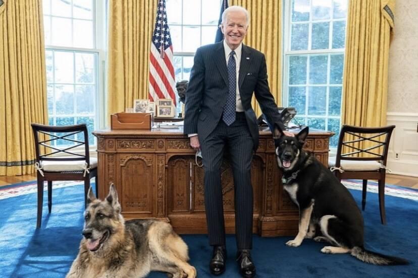 Por que o cão de Joe Biden está mordendo pessoas? Cesar Millan responde