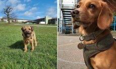 Cães vão à escola para ajudar alunos a lidar com traumas e saída do isolamento no Reino Unido