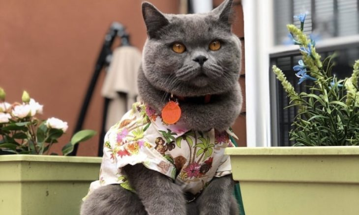Jovem desastrado tropeça em guia e mata o gato Ponzu, estrela do Instagram