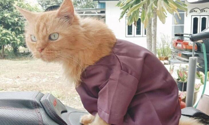 Na Malásia, a moda agora é vestir gatos para cerimônia muçulmana