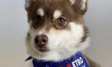 Cães em busca de independência financeira agora podem ter conta em um banco