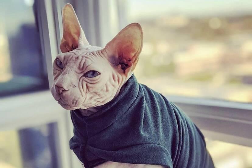 Campanha na internet junta R$ 42 mil, paga veterinário e salva a vida do gato Yoda