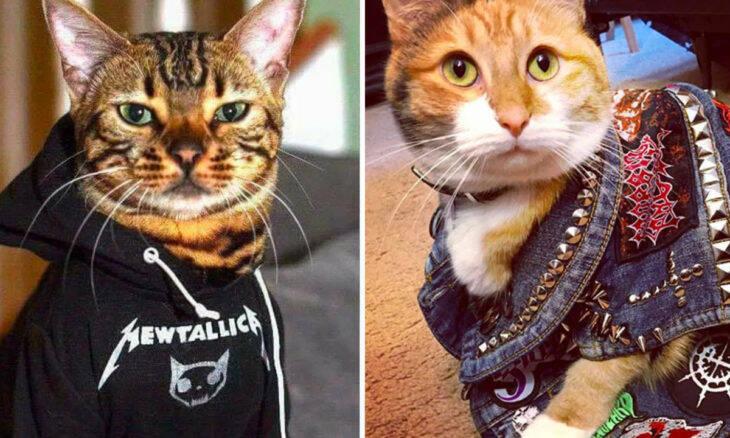 Site dedicado a bandas de heavy metal faz homenagem divertida aos gatos
