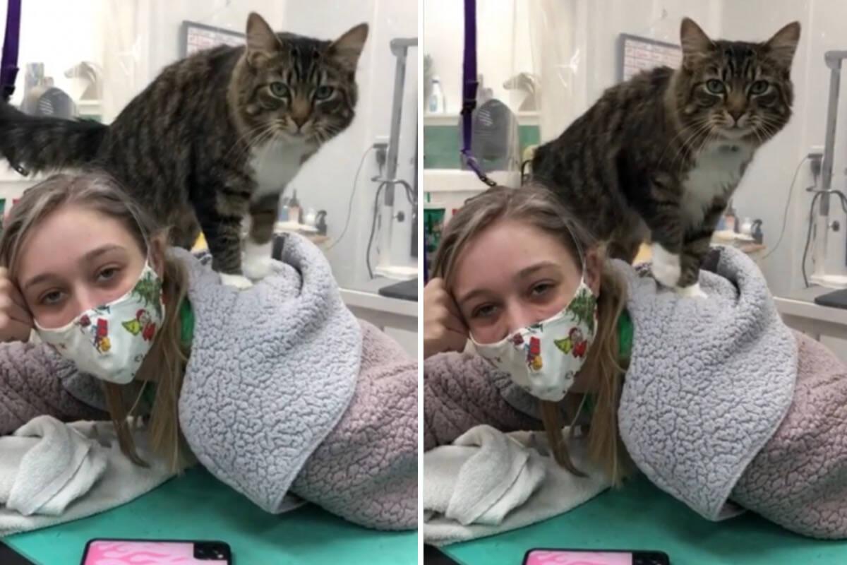 Vídeo: gata massageia funcionários de salão de beleza pet