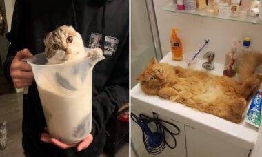Fotos provam que os gatos podem ser sólidos e líquidos