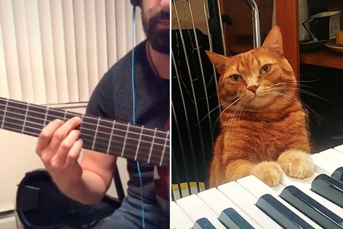 Incrível! Gato pianista participa de duetos jazzísticos no TikTok