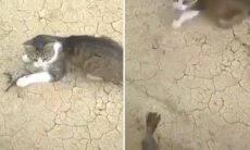 Vídeo: Passarinho 'ressuscita' e quase mata gato do coração