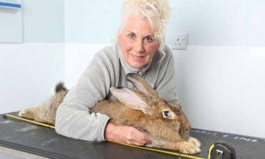 Dona do maior coelho do mundo oferece R$ 7,7 mil para quem recuperar o bicho, que foi roubado no fim de semana