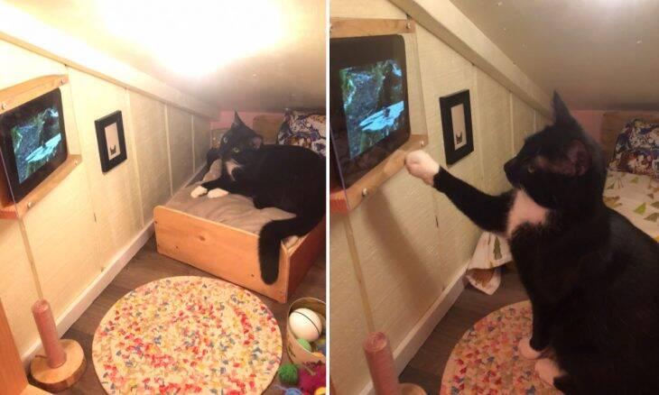 Viralizou: Gato ganha quarto de luxo com TV que só mostra vídeos de pássaros