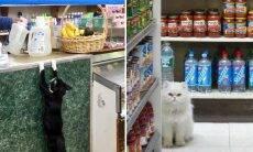 14 fotos hilárias mostram gatos dominando estabelecimentos comerciais