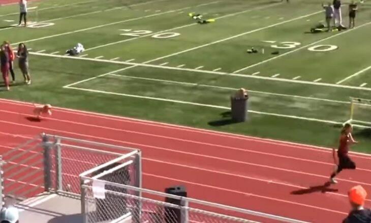 Vídeo: cachorro invade pista de corrida e acaba vencendo a competição