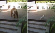 Cãezinhos se juntam para expulsar urso que invadiu casa
