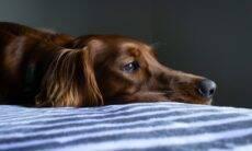 Abril Laranja: Saiba como denunciar maus-tratos contra animais