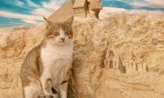 Entenda por que o povo era tão louco por gatos no Egito Antigo