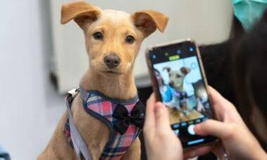 Vivo usa plataforma de relacionamento para facilitar adoção de pets