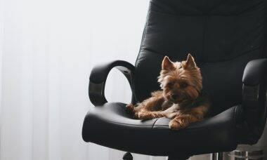 5 dicas para que o seu cão vire o companheiro de trabalho perfeito no home office