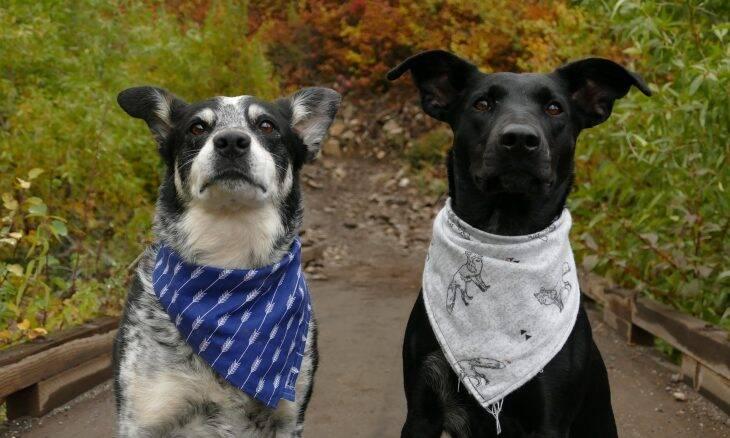 Tudo o que você precisa saber para ressocializar seu cão após mais de um ano em casa