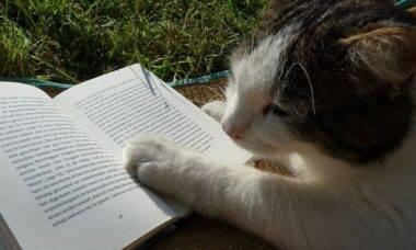 Leitura por crianças é um santo remédio contra a timidez em gatos