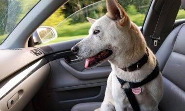 Levar cachorro no banco da frente rende multa de R$ 18 mil no Reino Unido